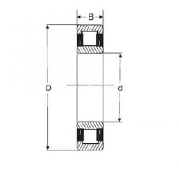 25 mm x 62 mm x 17 mm  SIGMA NU 305 cylindrical roller bearings